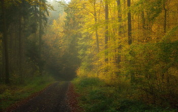 Утро в ноябре / Осенний утренний пейзаж.