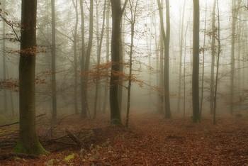 Опали листья .. / Осенний лесной пейзаж ..