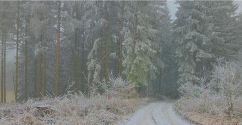 Затуманило.. / Мороз в туман посеребрил окрестности