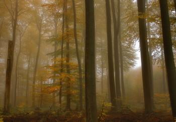 В желтом сарафане / Лесной осенний пейзаж . Туманным утром .