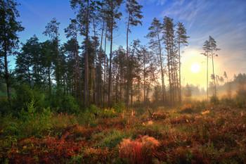 Рассвет в августе / Пейзаж Беларуси