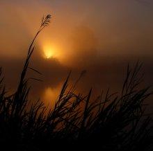 В высокой траве / Туманное утро. Рассвет.
