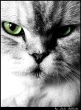 портрет 1ого уважаемого кота) / ***