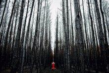 Без названия / Сгоревший лес и умирающий вместе с ним дух... (серия)