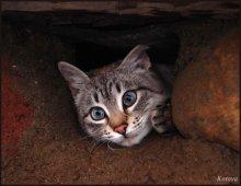 замуровали, демоны! / кошка вылазила из-под фундамента :)