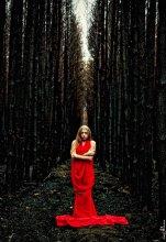 / Сгоревший лес и умирающий вместе с ним дух... (серия)