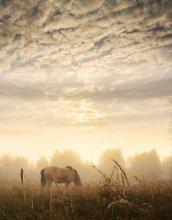 Молочное утро / Однажды утром....