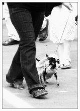"""Про гламур. Собачий:) / Хотела назвать что-то вроде """"Дама с собачкой"""" или еще как-нибудь, но остановилась на банально простом """"Про гламур. Собачий:)"""""""