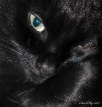 / 2008 год кот Пумба
