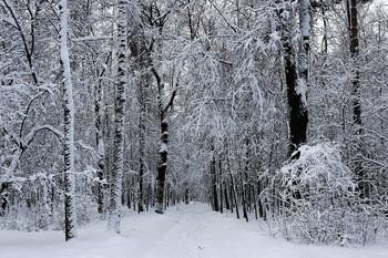 Прощальный аккорд зимы / Прощальная графика Зимы.