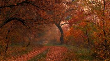 Осень с туманом / осень