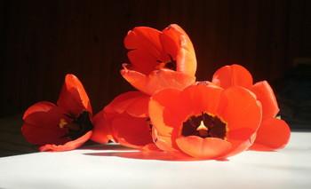 подарок / тюльпаны