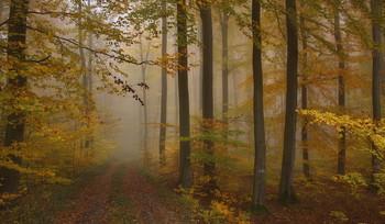 Осенними тропами .. / Осенний лесной пейзаж . Зарисовка .