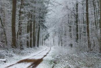 Уходящий снег ... / Зимний лесной пейзаж .