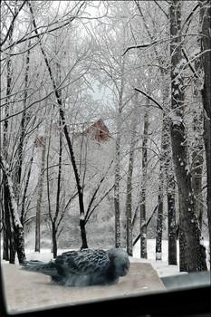 Наступили холода... / 2010 год