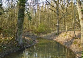 Весенние разливы .. / Лесной весенний пейзаж .Зарисовка