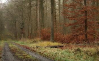 Досвидание осень ... / Лесной пейзаж . Этюд.