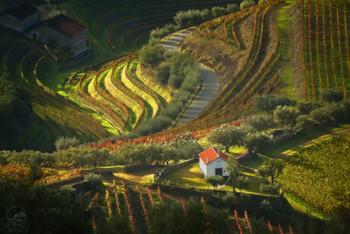 Долина портвейнов / Португалия, Дору