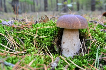 В сосновом лесу / ***