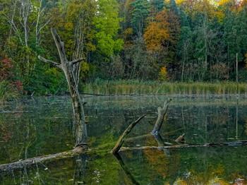 неприметная жизнь лесного болотца. рассвет.. / Онтарио, Канада
