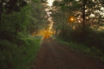 Начало нового дня .. / Утренний лесной пейзаж.