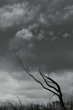 """Когда птицы уже на пути в тёплые края / Мои бывшие """"пленэры""""..."""