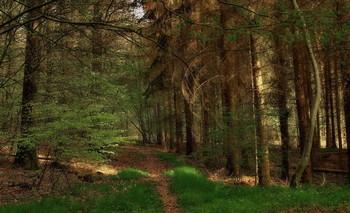 Когда весна .... / Весенний лесной пейзаж .Зарисовка .