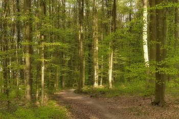Весеннее настроение .. / Вечерний лесной пейзаж . .