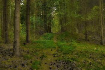 Весне навстречу / Весенний лесной пейзаж .