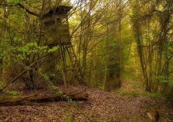 Старость / Весенний лесной пейзаж .