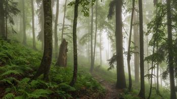 В эльфийском лесу / Горки город, Реликтовый лес, Красная поляна.  http://www.youtube.com/watch?v=T19_-ycPYjk