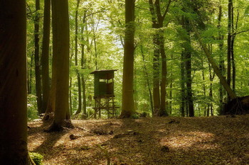 Лесными тропами / Охотничья вышка . Лесной весенний пейзаж .