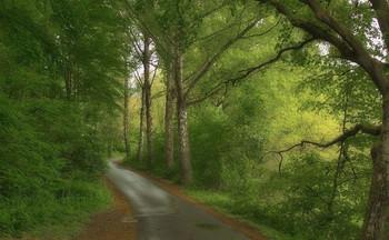 После дождя .. / Весенний пейзаж . Зарисовка.