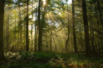 Рассвет / Утро . Весенний лесной пейзаж .