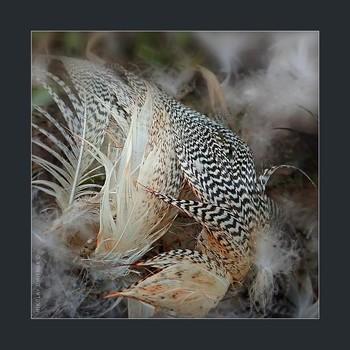 охота. 08. 05. 2020. / Северный атмосферный парк Джонатана Свифта.  music: Birds (Original Mix) · Misha · Monma https://www.youtube.com/watch?v=1Y94RDYN2o4