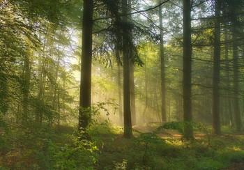 Майские зарисовки / Майским утром в лесу. Зарисовка