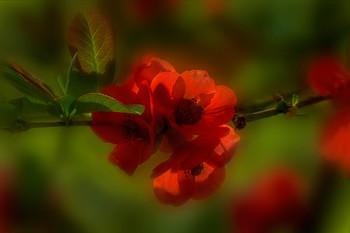 Про цветочек аленький ... / весна!..