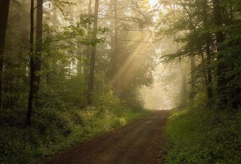 Лес проснулся.. / Утренний лесной пейзаж .