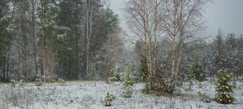 На опушке в снегопад / Апрельские прогулки