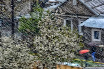 Снегопад в апреле. / Снегопад. Цветущие деревья, улица, люди.