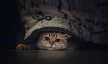 Игра в прятки..) / Game of hide...)