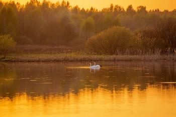 Золотой вечер / озеро Ильинское,Татарстан