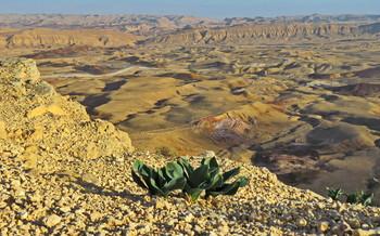 И на камнях растут цветы / Пустыня Негев. Кратер