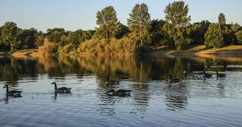 / Казарки на озере