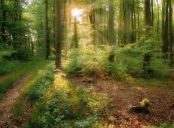 Утро в лесу / Утренний лесной пейзаж . Когда просыпается солнце .