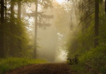 Даль туманная / Лесной утренний пейзаж.Зарисовка