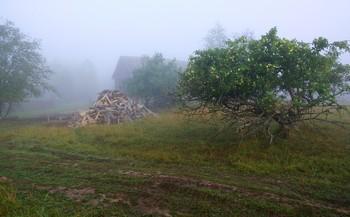 """""""Почему-то мне снится деревня ..."""" / """"Почему-то мне снится деревня ...  Видно, очень соскучился я ...  Снятся наши простые деревья:  Клены, яблони и тополя ...   Я скучаю, я очень скучаю ...  Снова сердцем давно уже там ...  Меня днем эти мысли терзают -  Вот и снится село по ночам ..."""""""