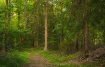 Лесными тропами / Когда наступает вечер . Лесной пейзаж .