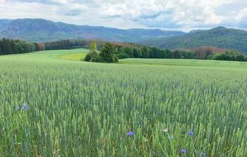 В долинах Саксонской Швейцарии / Из весны в лето..