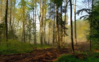 Солнечное утро.. / Туман и солнце в утреннем лесу.